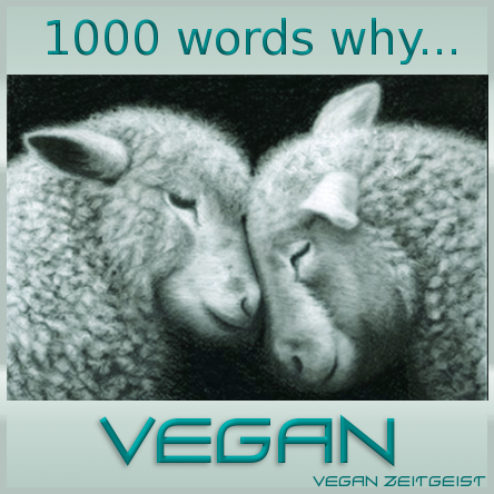 Vegan Quotes Simple Vegan Zeitgeist  The Spirit Of Our Age  Banners And Quotes