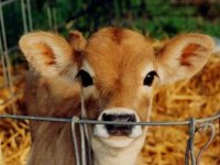 Vegan Zeitgeist's Favorite Animal Rights Quotes!